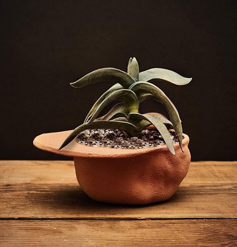 Plantera i en kepa