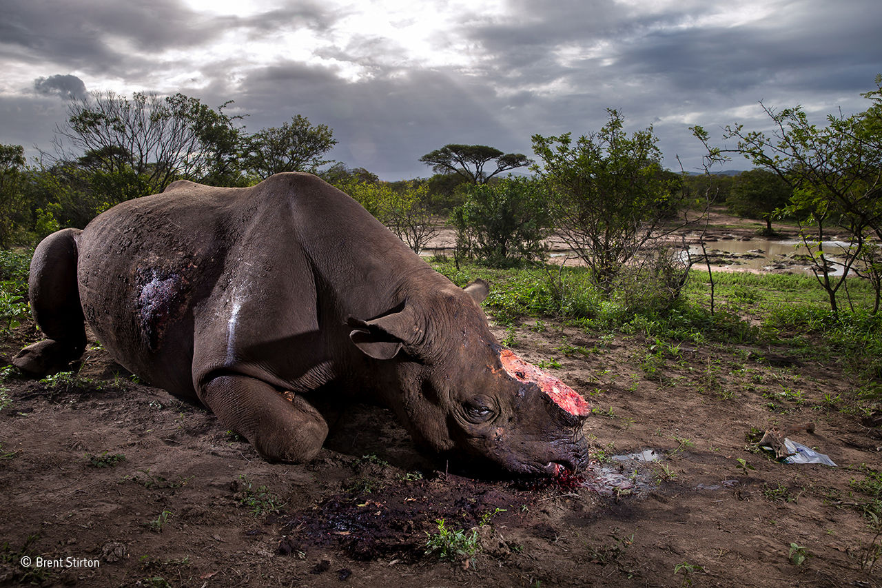 Här är vinnarna i Wildlife Photographer of the Year 2017
