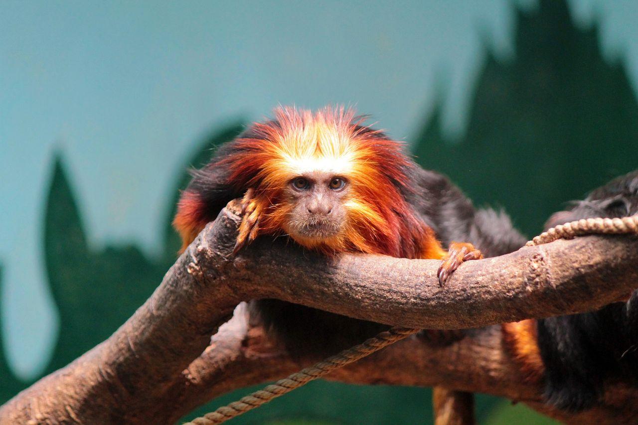 Sällsynta djur stjäls från djurparker