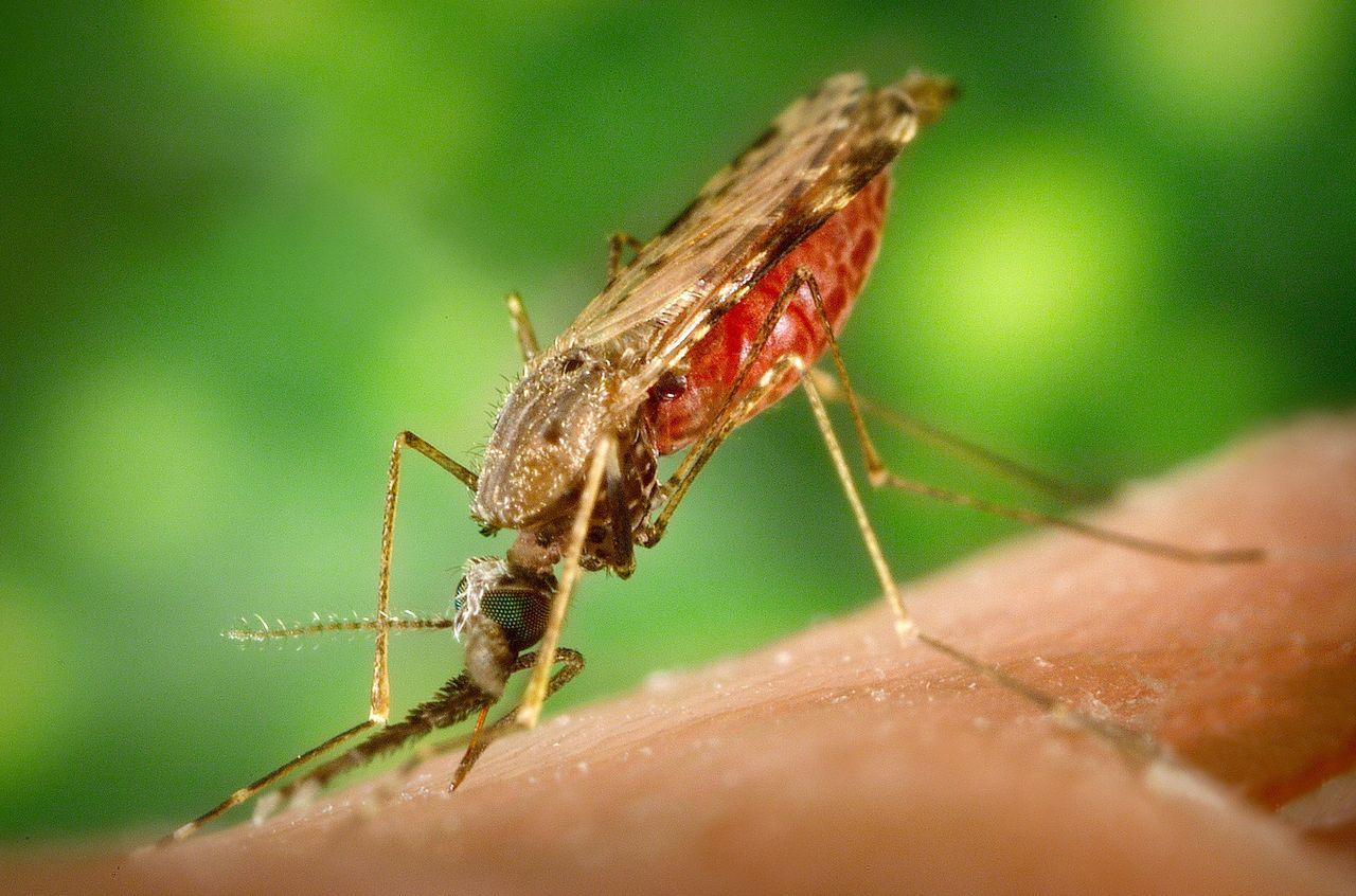40 000 människor har räddats från att dö i malaria