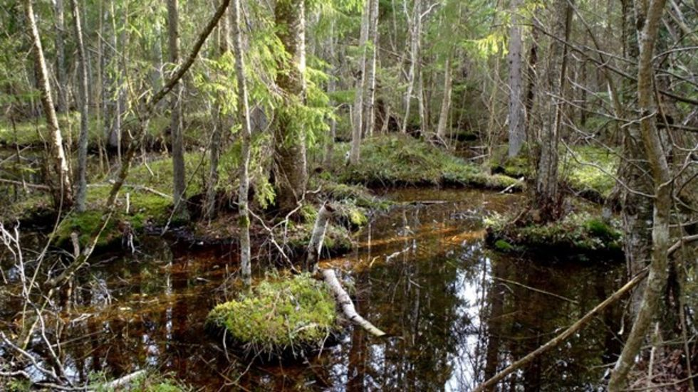 Gotland får två nya naturreservat