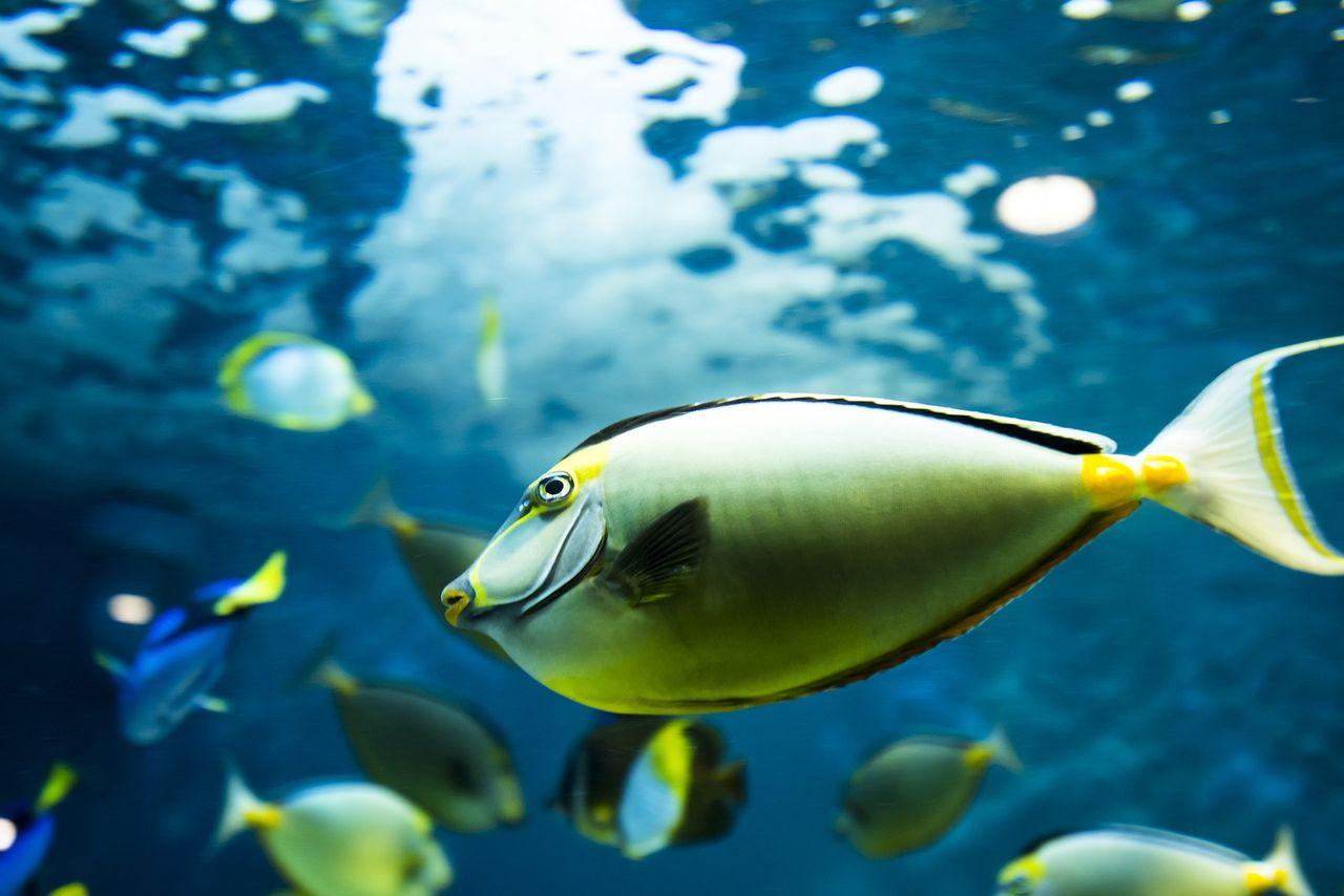 Önationer i Stilla havet kan förlora 80 procent av sin fisk
