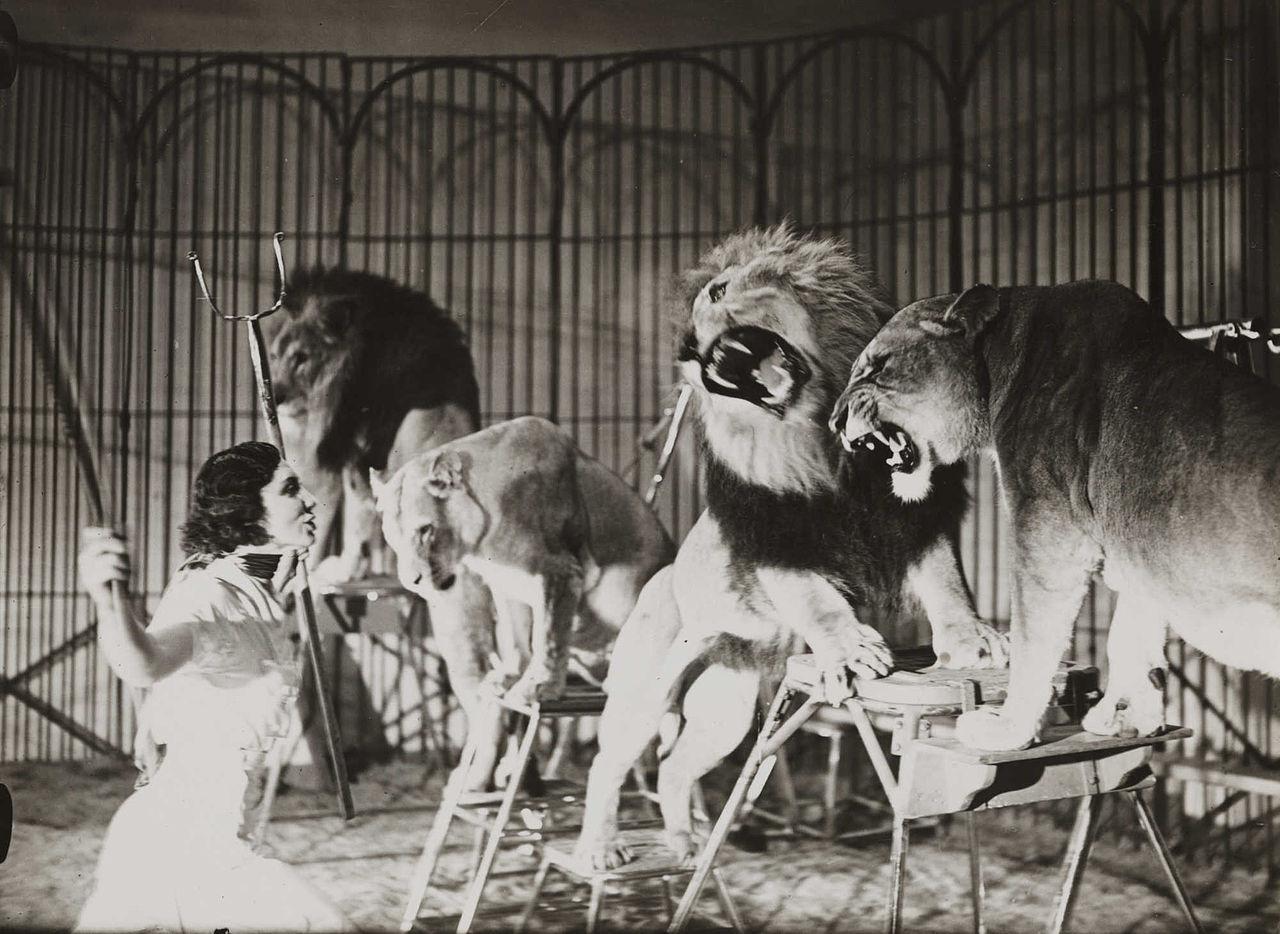 Skottland förbjuder vilda djur på cirkusar