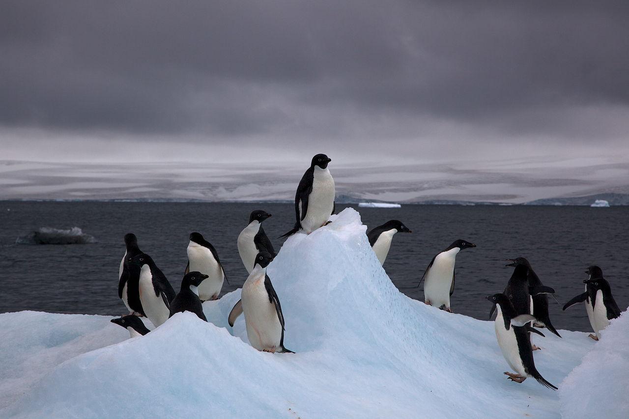 Lever med pingviner