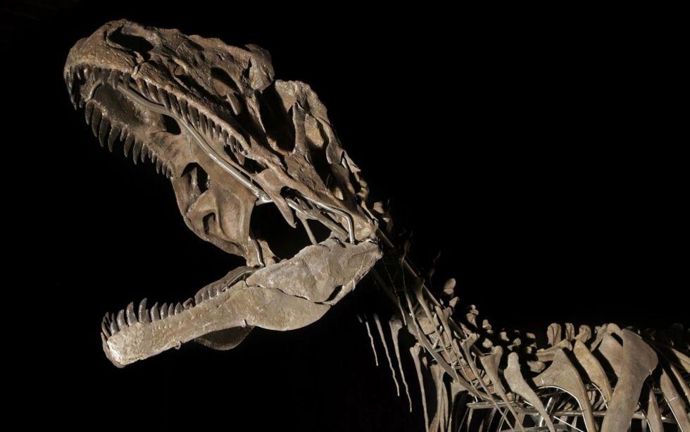 Dinosaurie-skelett från okänd art säljs på auktion