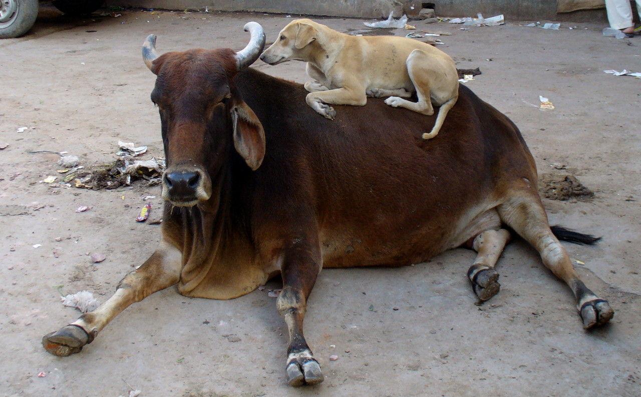 Vilda hundar har dödat sex barn i indisk stad