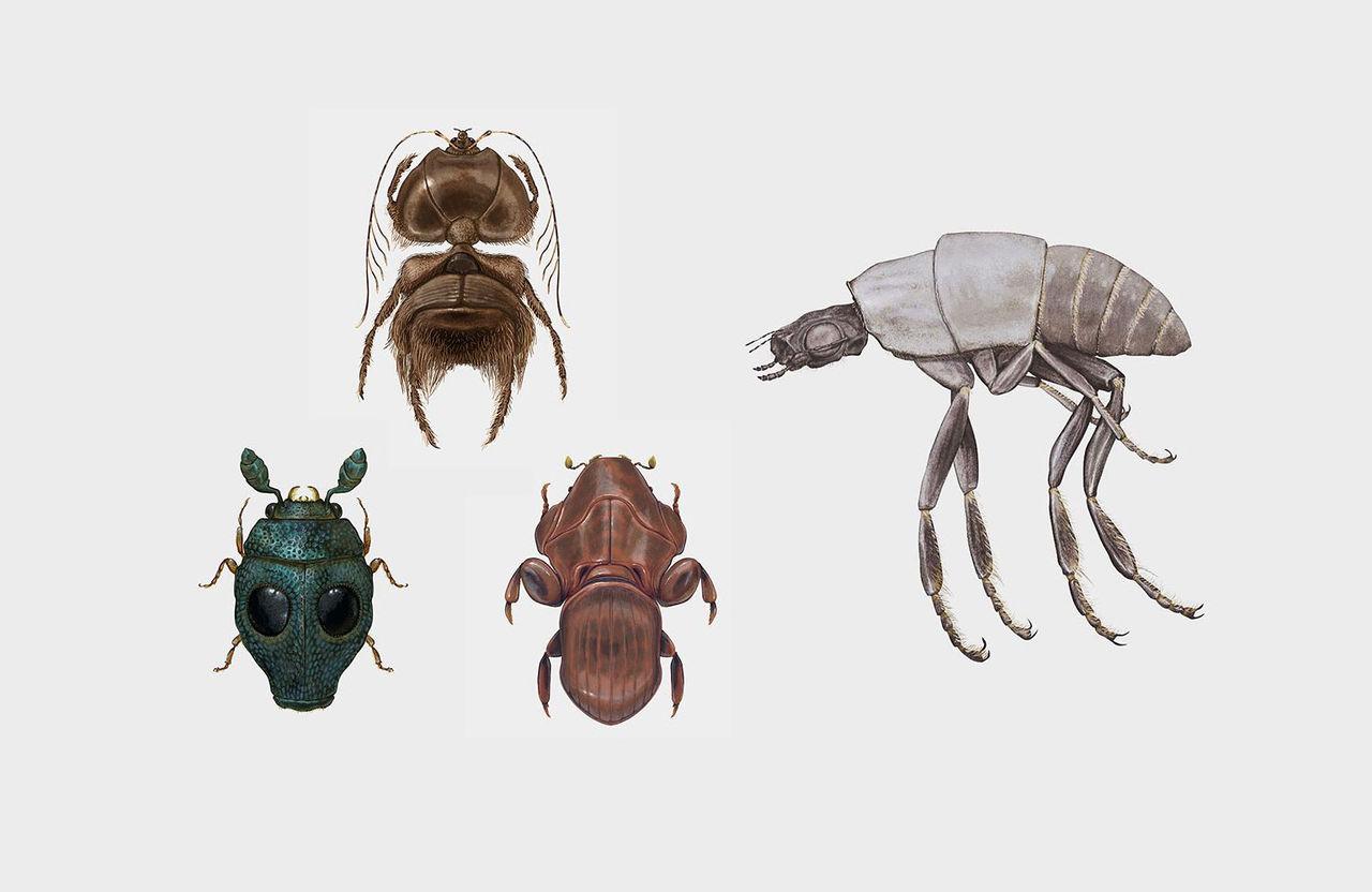 Fina insekter i Star Wars-stil