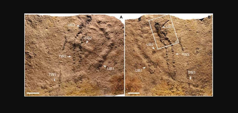 Det här är världens äldsta fotspår
