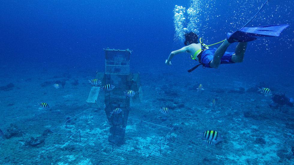 Minecraft ska rädda världens korallrev