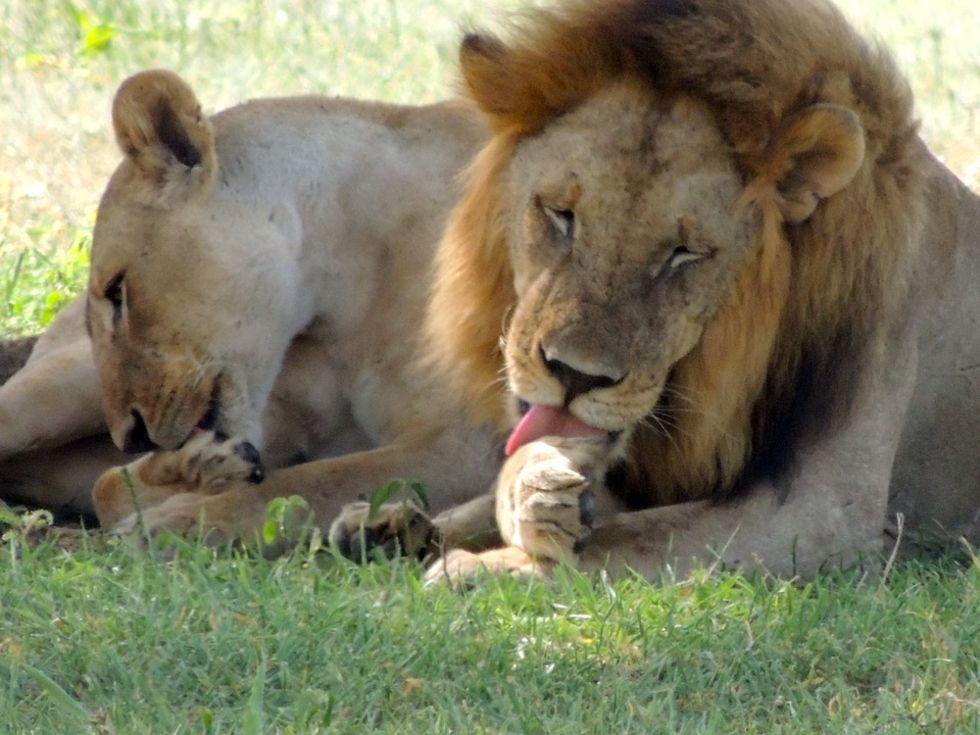 Lejon åt upp tre stycken tjuvjägare