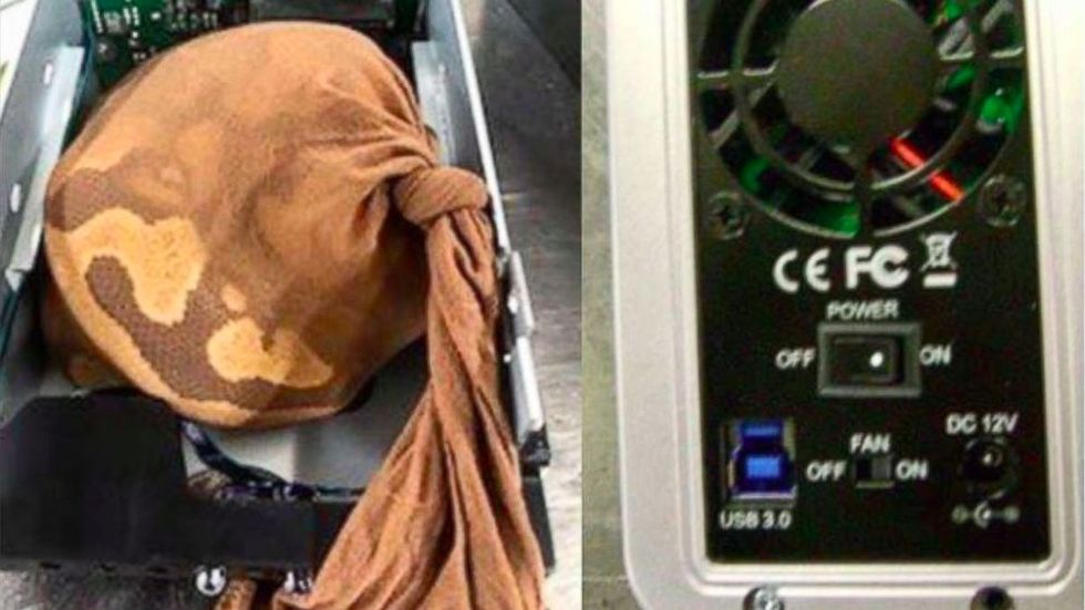 Kvinna försökte smuggla orm i hårddisk på flygplan