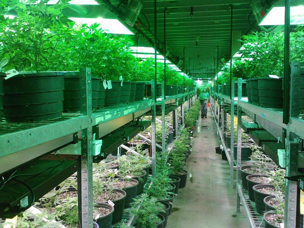 Storbritannien legaliserar medicinsk marijuana