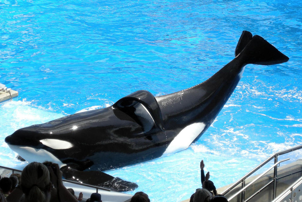Reseföretag slutar arrangera resor till SeaWorld