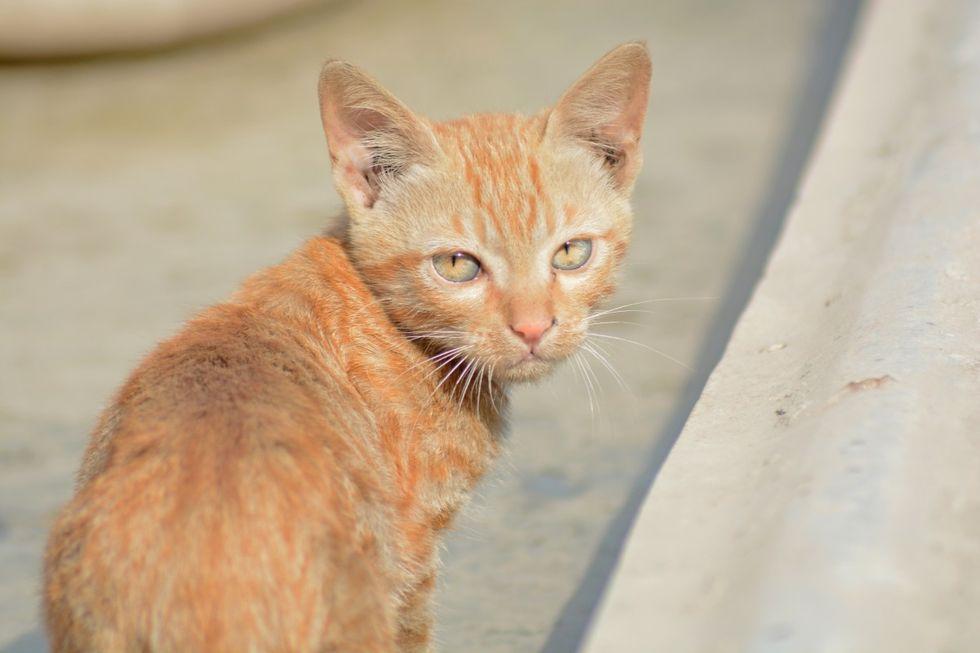 Stad på Nya Zeeland vill förbjuda katter