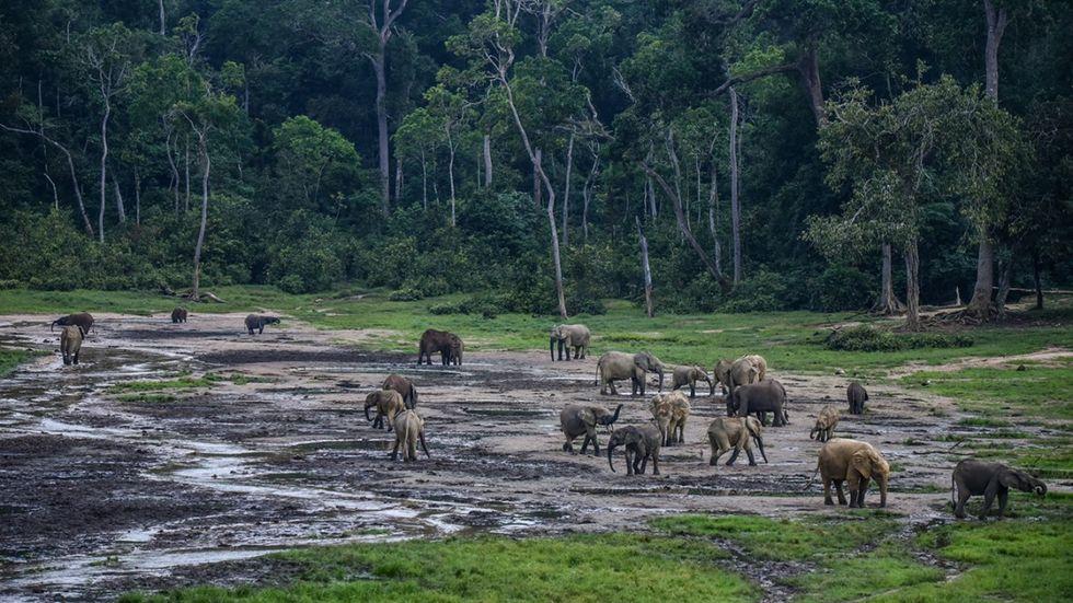 AI används för att skydda elefanter från tjuvskyttar