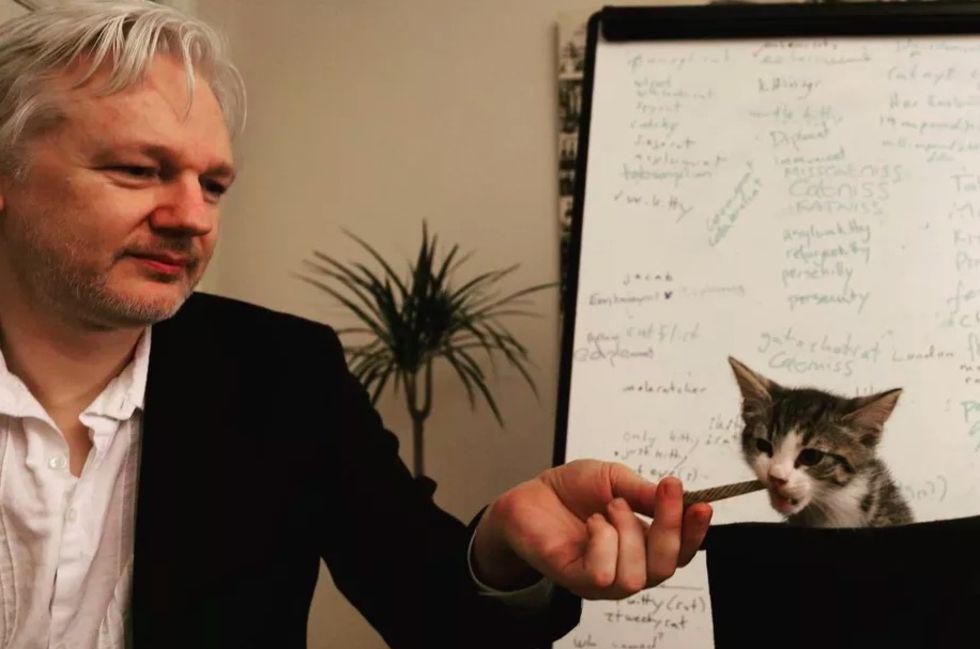 Ecuador vill att Julian Assange tar hand om sin katt
