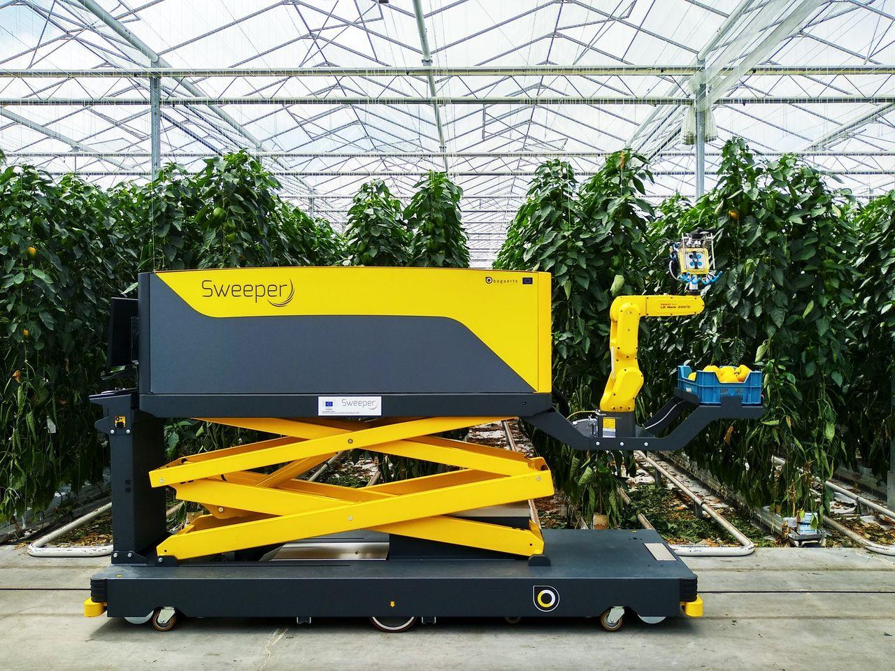 Roboten Sweeper plockar paprika