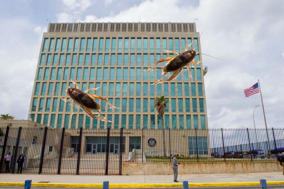 Ljudattacker på Kuba kan ha orsakats av syrsor