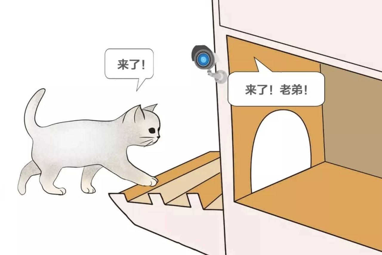 Baidu har utvecklat en smart kattkoja