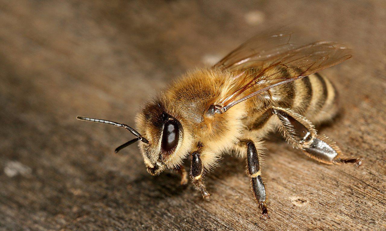 Insektsarter försvinner i en rasande hastighet
