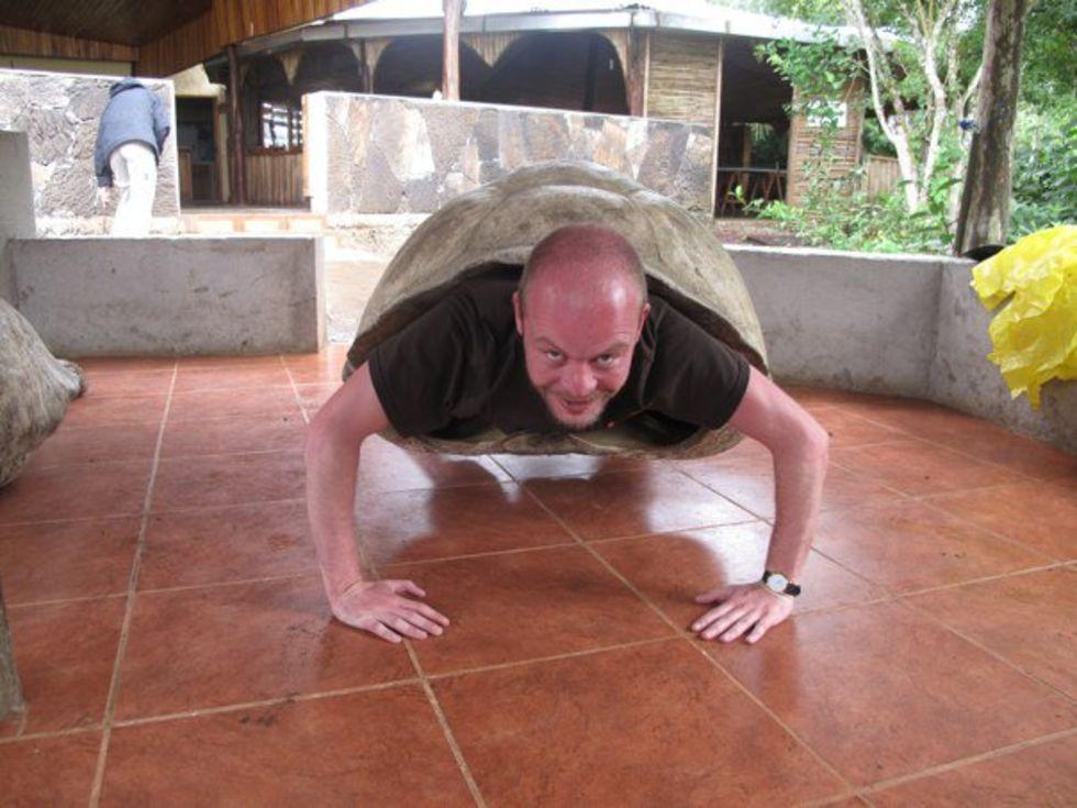 Jättesköldpaddan chelonoidis phantasticus siktad på Galapagos