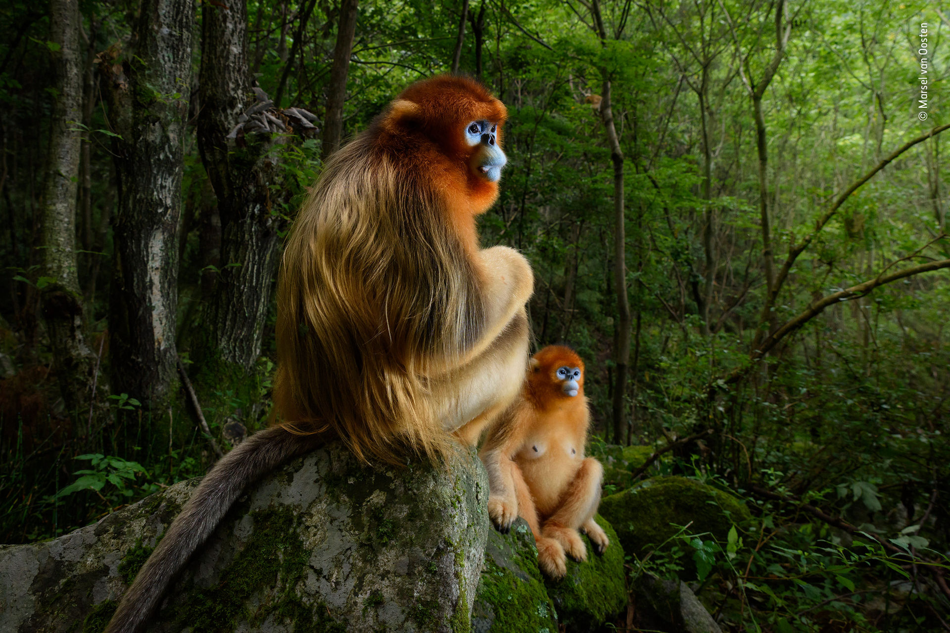 Kolla in Wildlife Photographer of the Year
