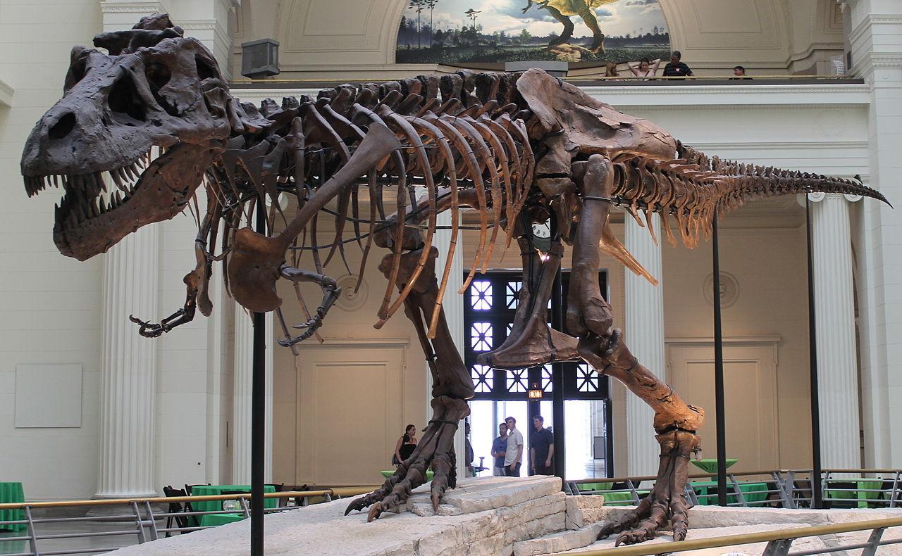Paleontologer vill förbjuda försäljning av dinosaurie-fossil