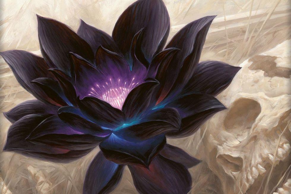 MTG-kortet Black Lotus har sålts för 166.100 dollar