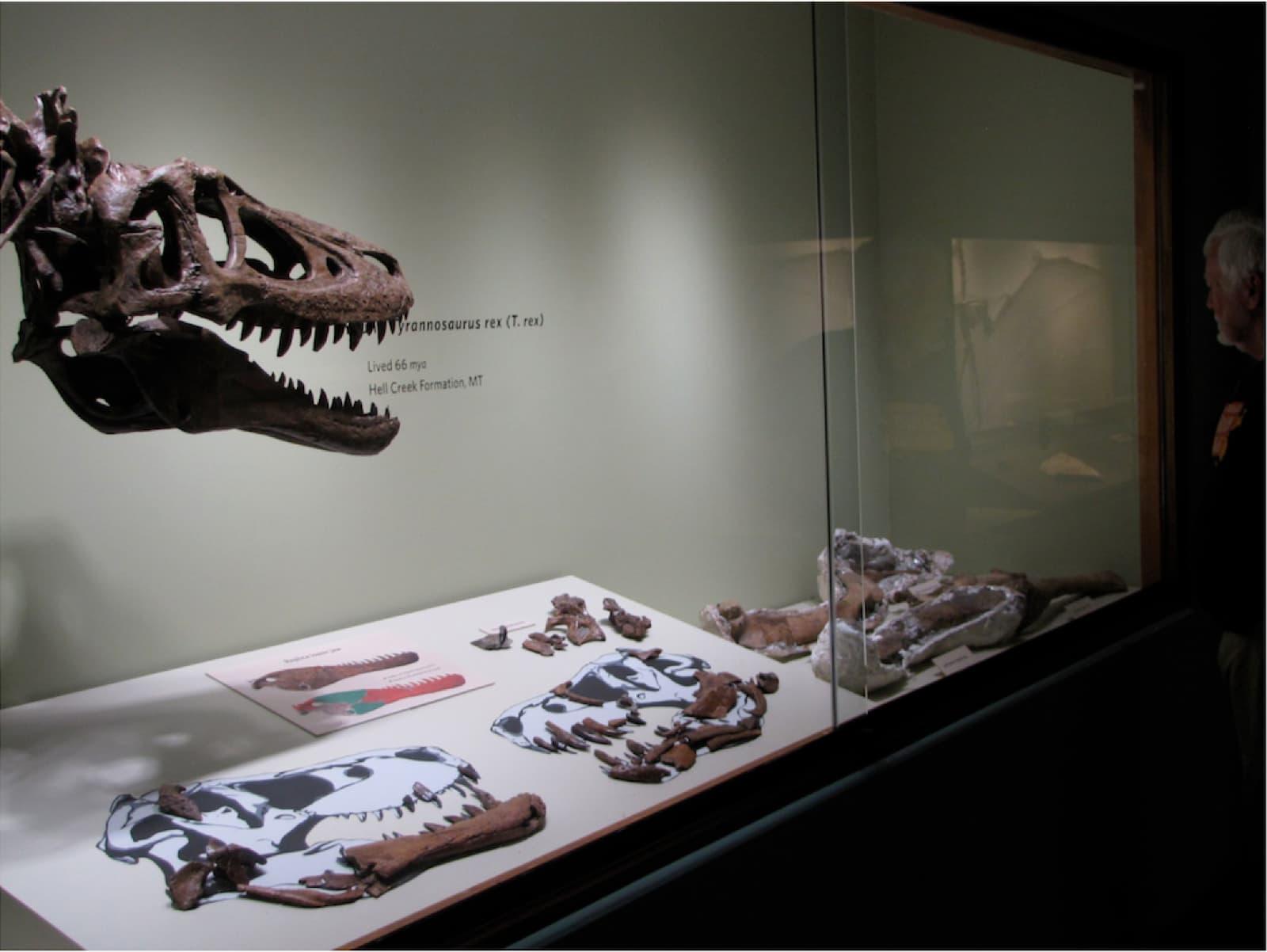 Dating tekniker fossil
