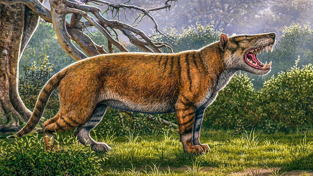 Fossil från stor köttätare hittade i Kenya