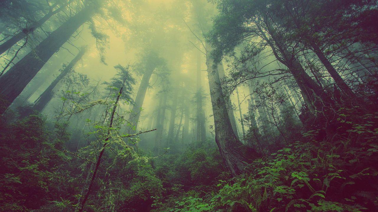 Kan 1,2 biljoner träd rädda världen?