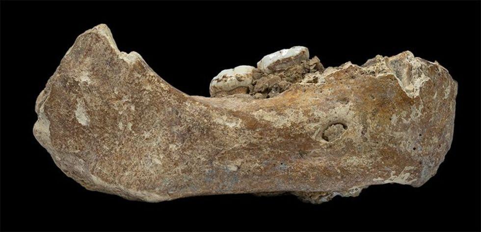 Fossil från denisovamänniska hittad i Tibet