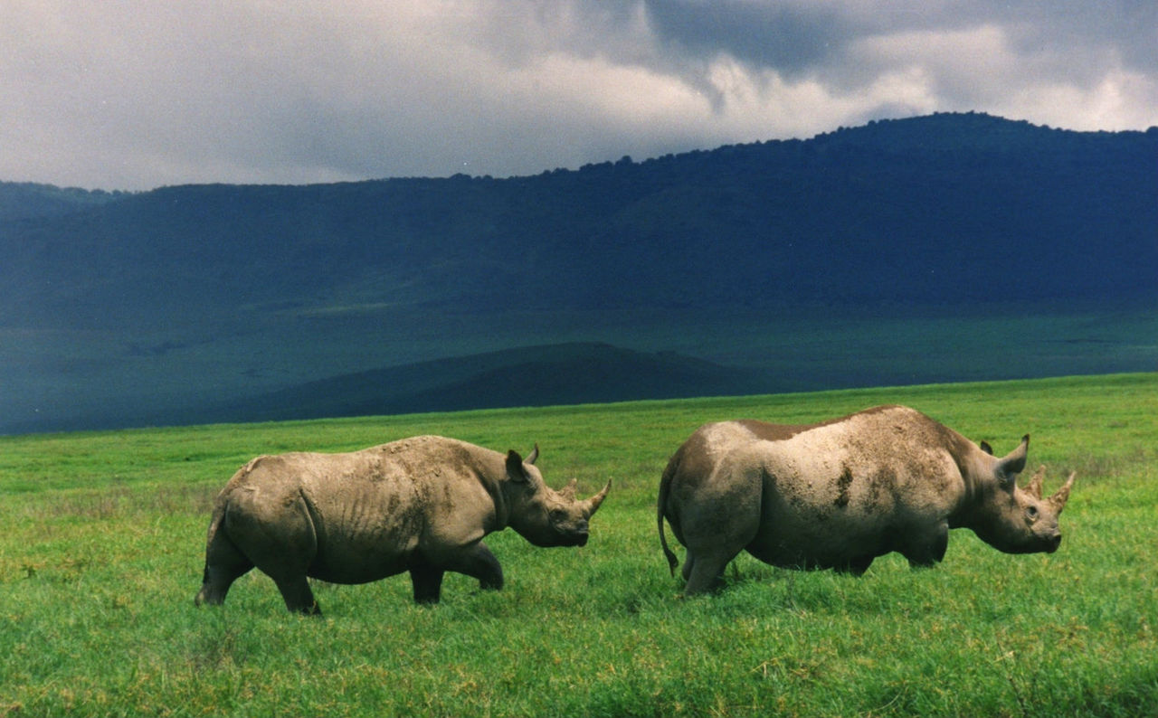 Rapport: En miljon arter riskerar att utrotas