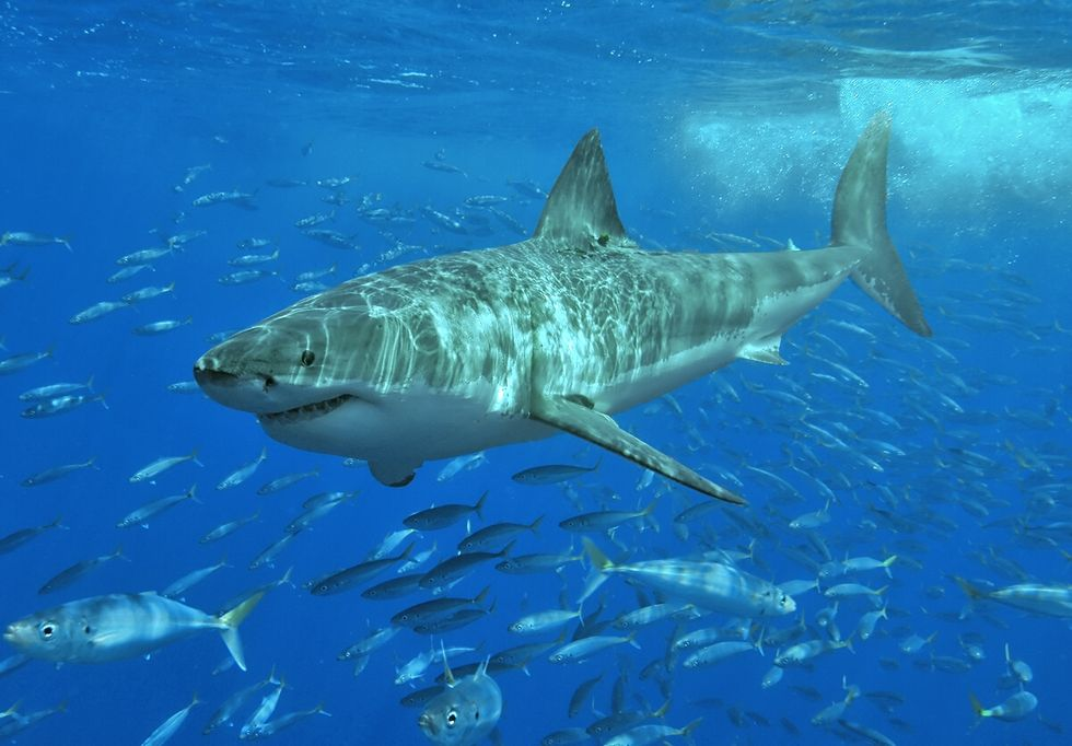 Tencent köper upp svenska spelstudion Sharkmob