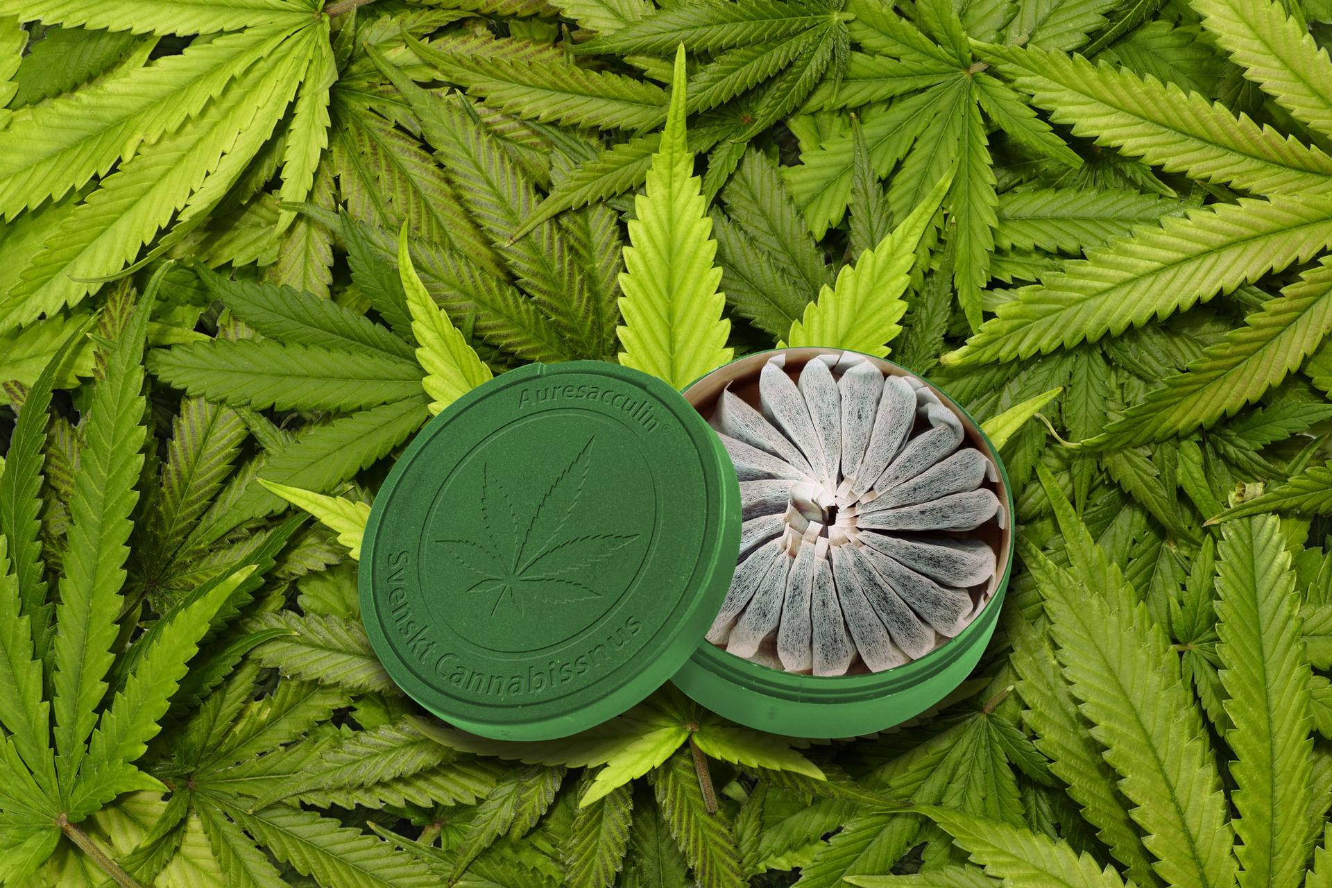 Svenskt företag ska göra cannabissnus
