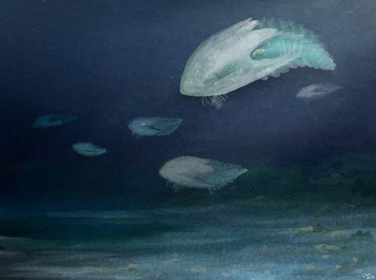 Nyupptäckt fossilart får namn efter Millenium Falcon