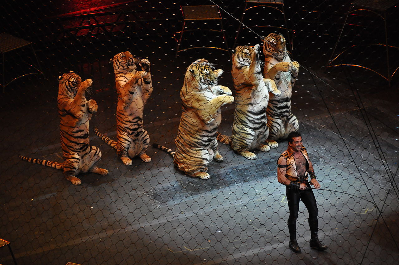 Vilda djur på cirkus förbjuds i hela Storbritannien