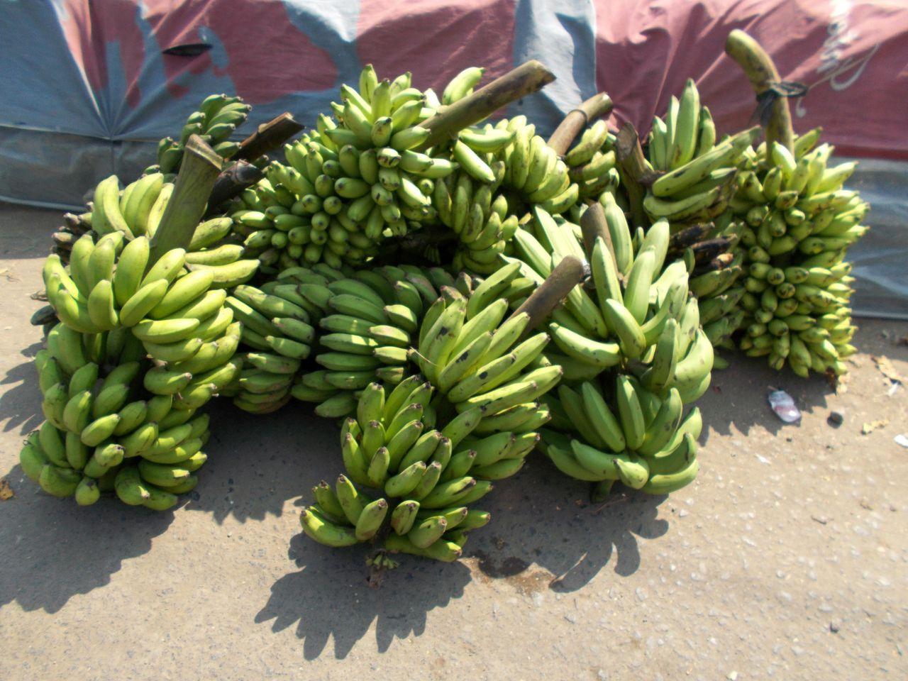 Fruktad banansjukdom hittad i Sydamerika