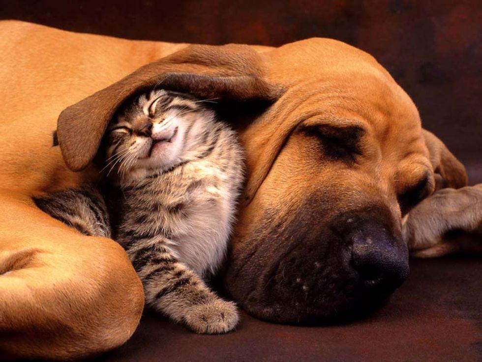 Nytt vaccin ska göra hundar och katter allergifria