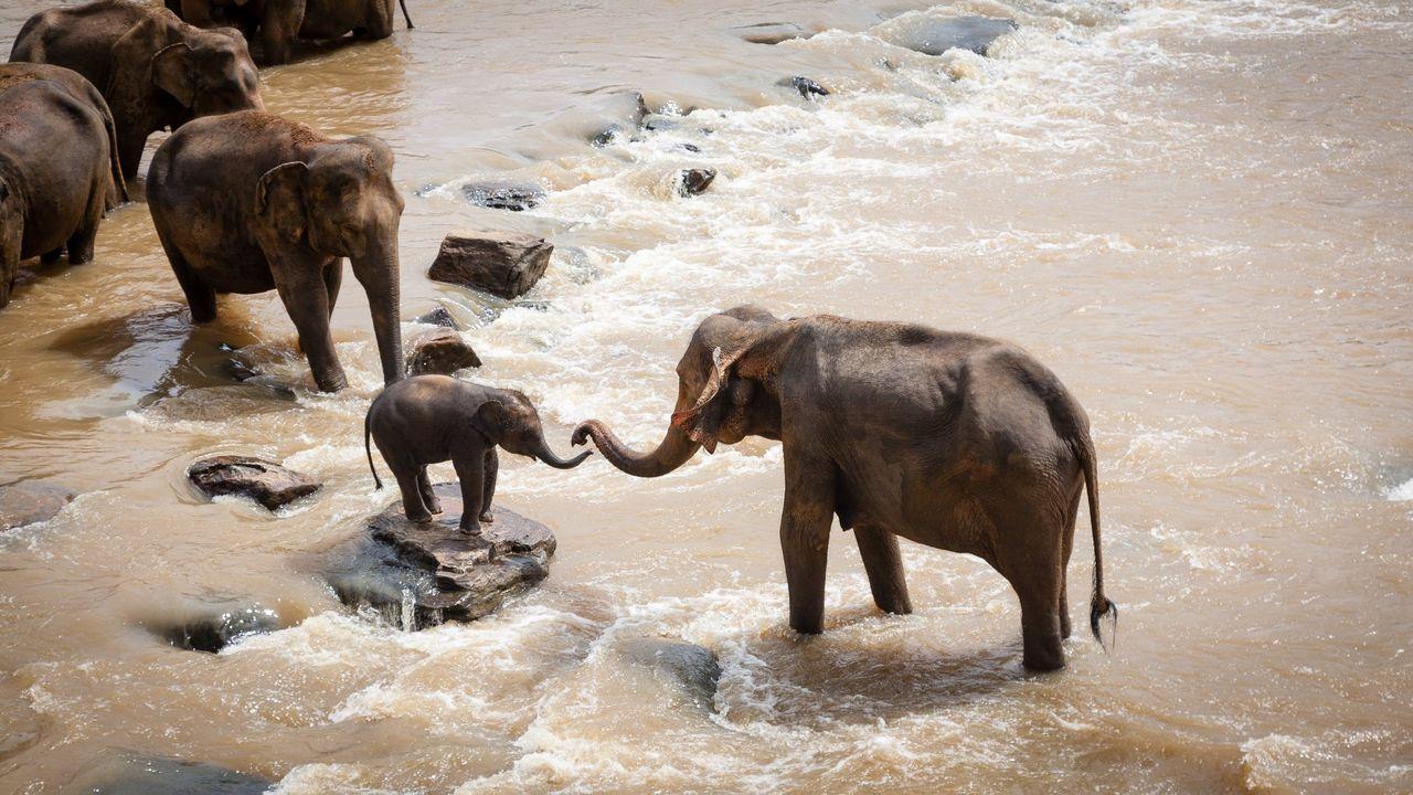 Nu förbjuds handel med vilda elefanter till djurparker