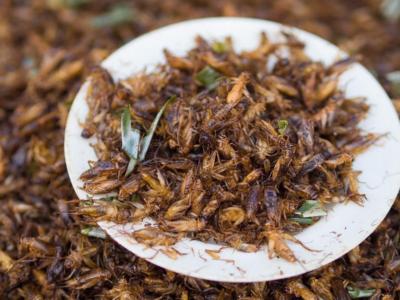 Nästa år kan vi antagligen äta korv gjord av insekter