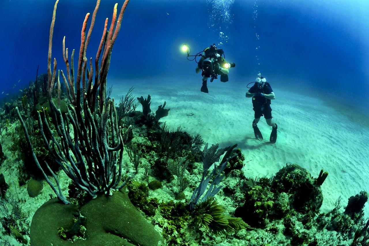 Högtalare används för att locka fiskar till döda korallrev