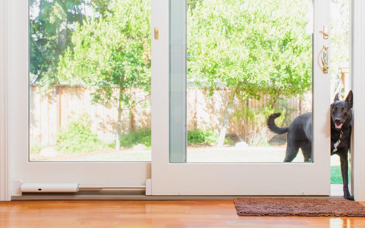 Wayzn gör din skjutdörr till en smart husdjursingång