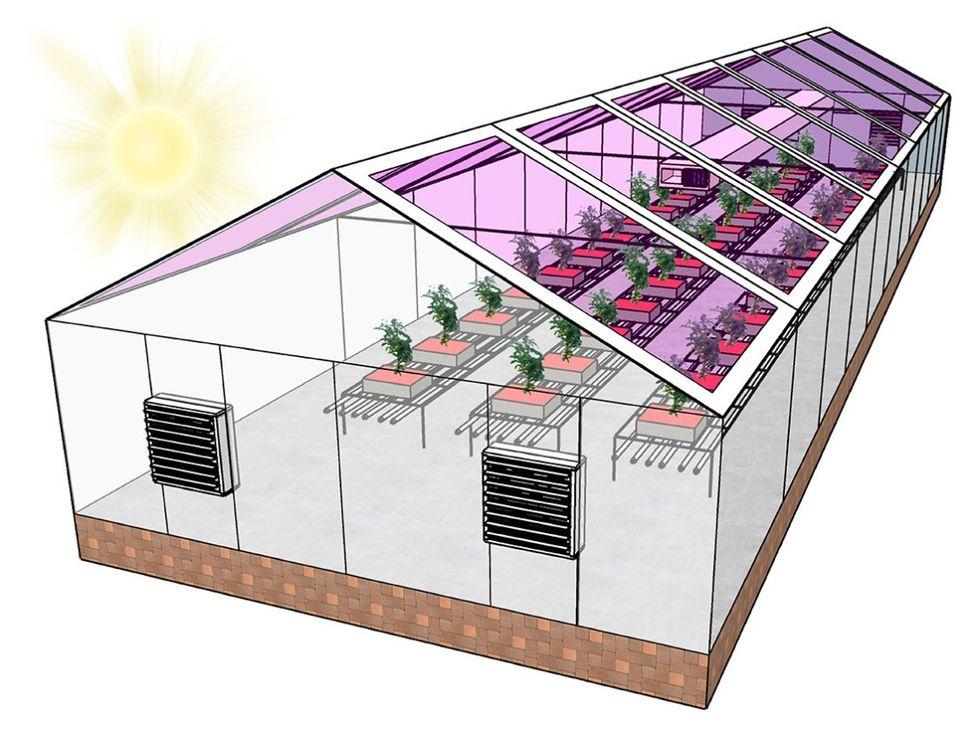 Forskare testar transparenta solpaneler på växthus