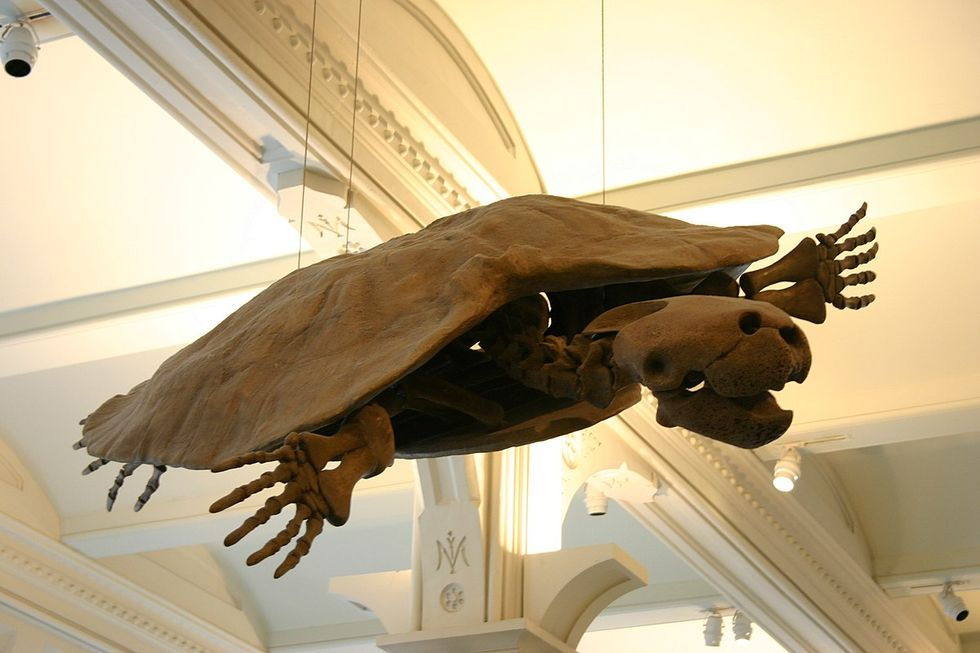 Fossil från jättesköldpaddor hittade i Sydamerika