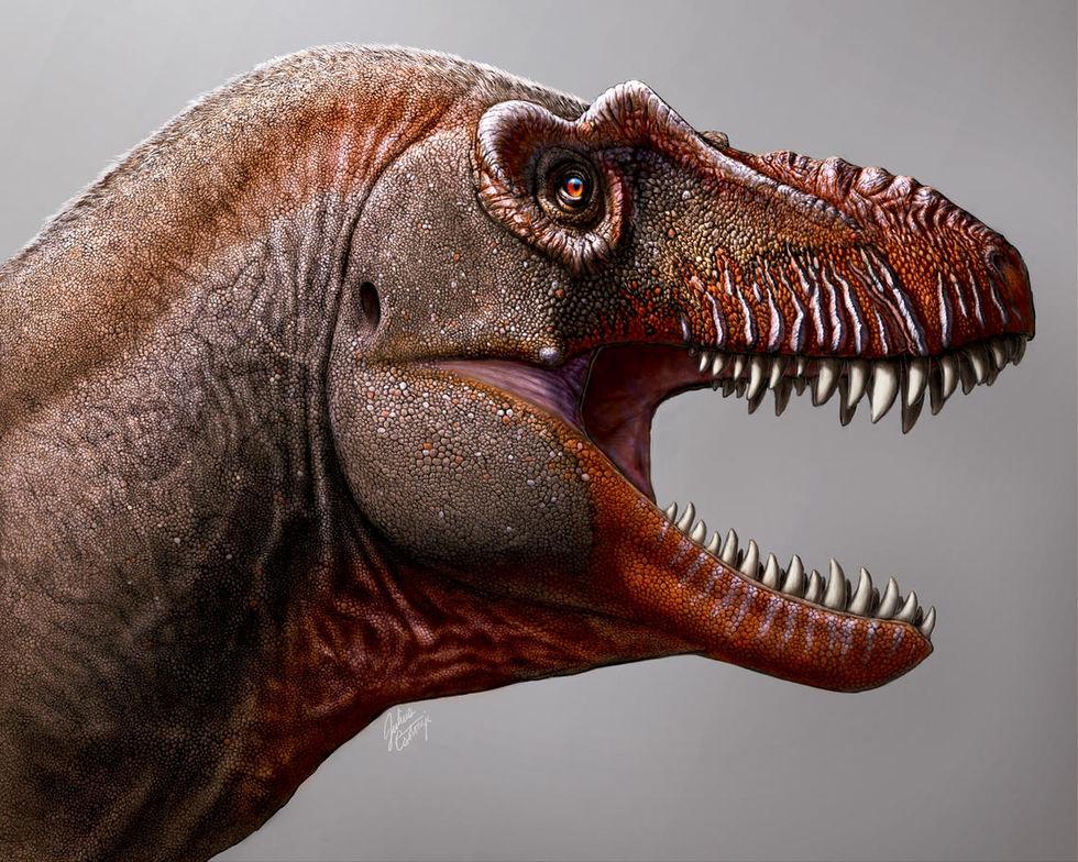 Fossil från tidigare okänt Tyrannosaurus hittad i Kanada