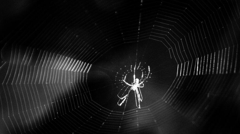 Stor darknet-operatör hackad