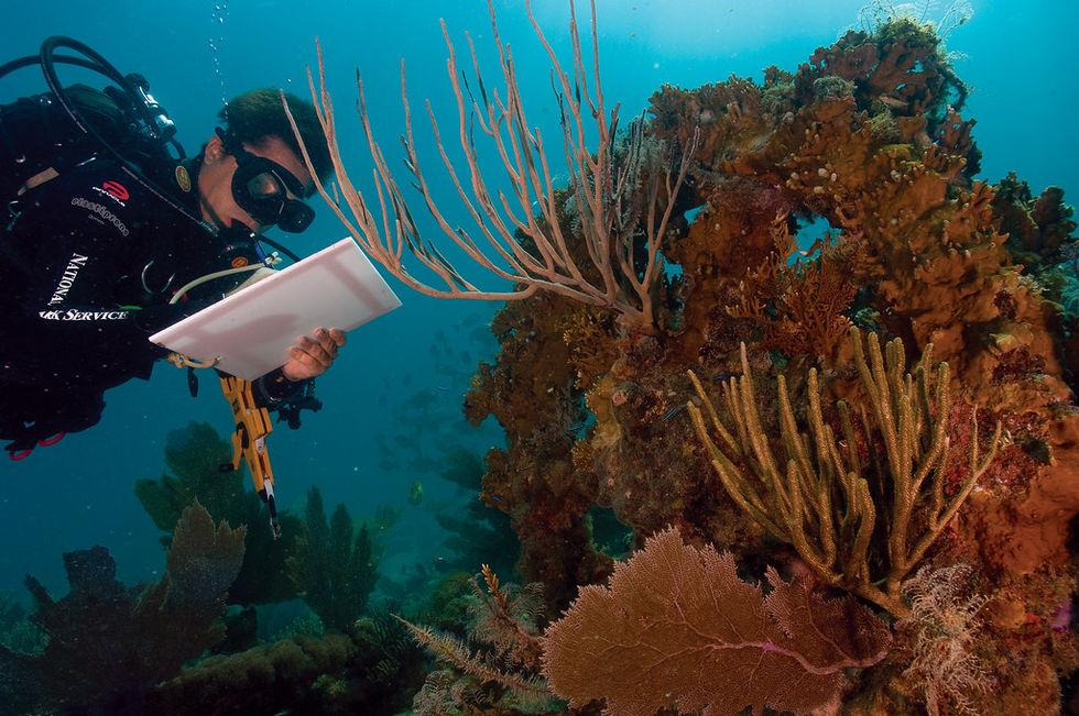 Stora barriärrevet drabbat av massiv korallblekning igen