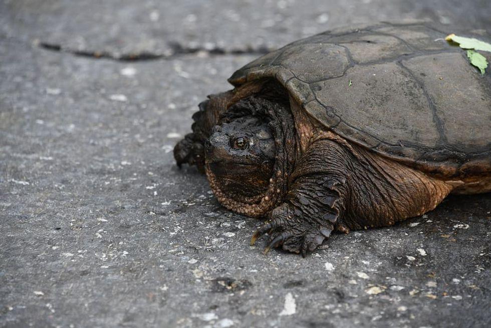 Italiensk kvinna bötfälld för sköldpadds-promenad
