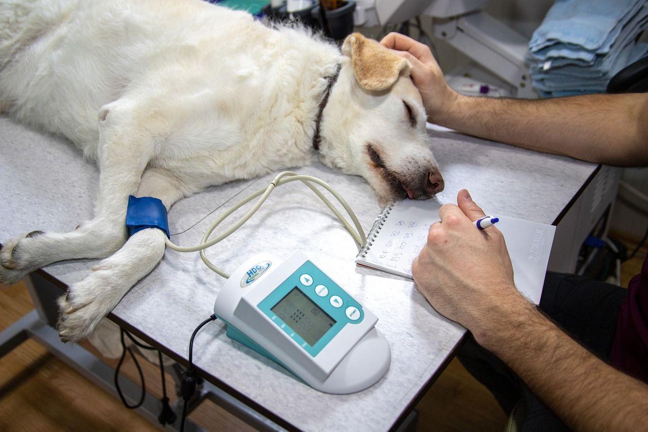 Veterinärer uppmanas att inte skriva ut propfol till djur